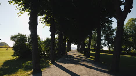 Walk-Along-The-Alley-Of-Trees-With-Long-Shadows
