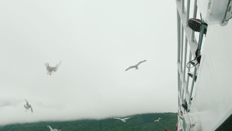 A-Flock-Of-Seagulls-In-Flight-Against-The-Background-Of-Picturesque-Mountains-And-Fjords