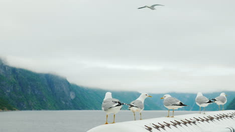 Several-Seagulls-Are-Sitting-On-Board-The-Ship-Against-The-Background-Of-The-Picturesque-Norwegian-F