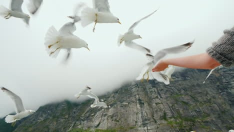 A-Woman-s-Hand-Feeds-A-Flock-Of-Gulls-With-A-Piece-Of-Bread-Cruise-On-The-Fjords-Of-Norway-4k-Video