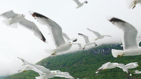 A-Flock-Of-Gulls-Flies-Off-The-Side-Of-A-Cruise-Ship-In-The-Background-Of-The-Fjords-Of-Norway