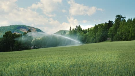 The-Irrigation-System-Water-The-Green-Wheat-Field-Agriculture-In-Norway-4k-Video