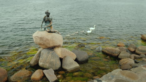 The-Statue-Of-The-Little-Mermaid-In-The-Bay-Of-Copenhagen-A-Swan-With-Small-Chicks-Next-To-It-Rainy-