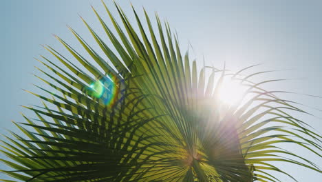 Sun-Rays-Beautifully-Shine-Through-The-Branches-Of-Several-Palms-Against-The-Blue-Sky-4k-Video
