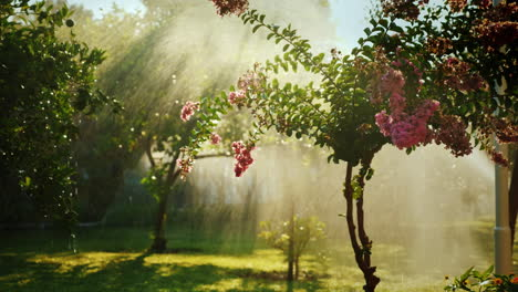 The-Rays-Of-The-Sun-Illuminate-A-Small-Garden-With-Fruit-Trees-And-Flowers-Where-The-Irrigation-Syst