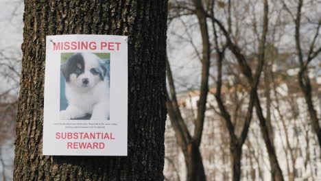 On-The-Tree-Hangs-The-Announcement-Of-The-Missing-Puppy