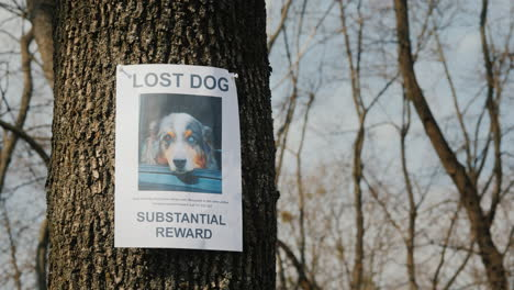 On-The-Tree-Hangs-A-Poster-About-The-Disappearance-Of-The-Dog-Breed-Australian-Shepherd