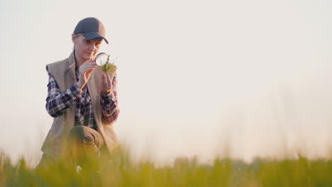 A-Farmer-Studies-The-Shoots-Of-Wheat-On-The-Field