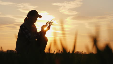 A-Farmer-Working-In-The-Field-Is-Studying-Wheat-Sprouts-Looking-Through-A-Magnifying-Glass