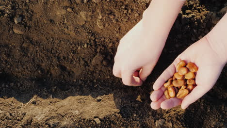 Farmer-s-Hands-Are-Planting-Grain-Into-The-Soil-New-Life-Concept