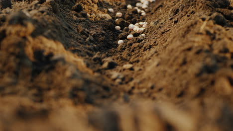 Seeds-Fall-Into-The-Ground-The-Beginning-Of-A-New-Life