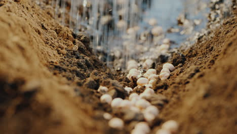 Seeds-Lie-In-The-Ground-They-Are-Abundantly-Watered-The-Beginning-Of-A-New-Life-Concept