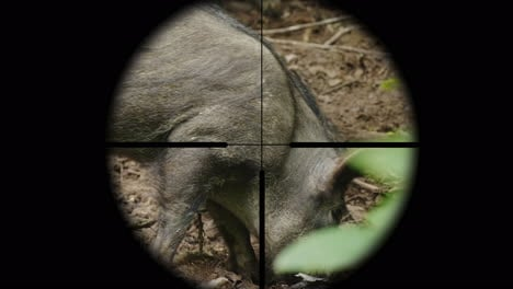 View-Through-A-Rifle-Optical-Sight-On-A-Wild-Animal-In-The-Forest-The-Hunter-Takes-Aim-At-The-Boar