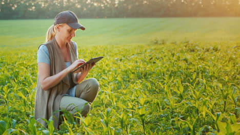 A-Farmer-Works-In-A-Field-Of-Young-Corn-Uses-A-Tablet-Side-View