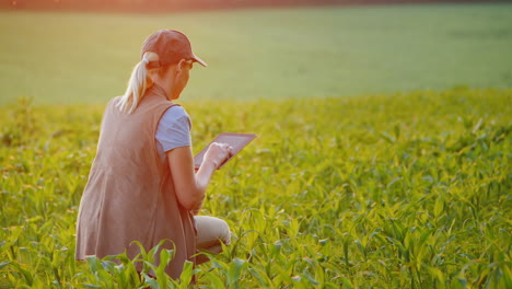 A-Farmer-Works-In-A-Field-Of-Young-Corn-Uses-A-Tablet-Back-View