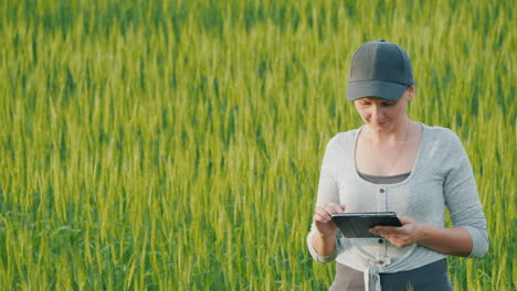 Woman-Farmer-With-Tablet-In-Hand-Stands-On-Green-Wheat-Field