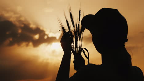 Silhouette-Of-A-Farmer-Looking-At-The-Ears-Of-Wheat-In-The-Rays-Of-The-Sun