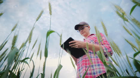 Woman-Farmer-Working-In-A-Wheat-Field-Using-A-Tablet-Bottom-Angle-Shooting