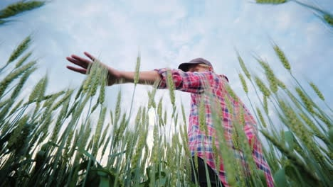 Young-Woman-Farmer-Palm-Ears-Of-Wheat-The-Lower-Angle-Shooting