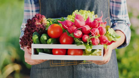 A-Farmer-Holds-A-Wooden-Box-With-A-Set-Of-Fresh-Ripe-Vegetables-From-His-Garden