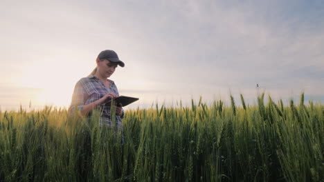 Middle-Aged-Female-Farmer-Working-In-A-Wheat-Field-Looking-At-Data-On-A-Tablet