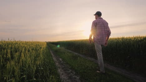 Purposeful-Male-Farmer-Goes-On-The-Road-Between-The-Fields-Of-Wheat-At-Sunset-People-In-Agribusiness