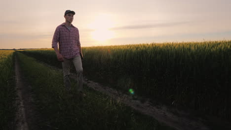 A-Successful-Farmer-Walks-Along-His-Wheat-Field-At-Sunset-People-In-Agribusiness-Concept-Steadicam-S