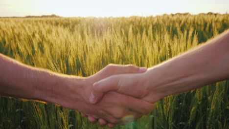 Friendly-Handshake-Of-Two-Farmers-On-The-Background-Of-A-Wheat-Field