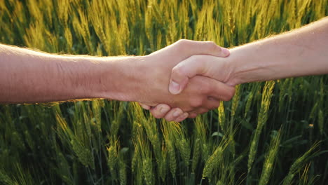 Two-Farmers-Shaking-Hands-Against-The-Background-Of-A-Wheat-Field
