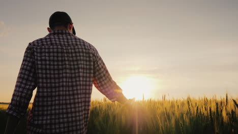 A-Man-A-Farmer-Walks-Across-A-Field-Of-Wheat-In-The-Rays-Of-Sunset-Stroking-Spikelets-With-His-Palm-