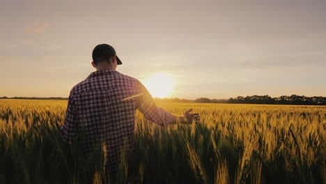 A-Man-A-Farmer-Walks-Across-A-Field-Of-Wheat-In-The-Rays-Of-Sunset-Stroking-Spikelets-With-His-Palm