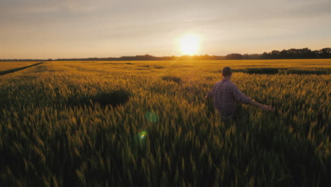 A-Young-Farmer-Looks-At-The-Spikelets-Of-Wheat-Standing-In-A-Field-At-Sunset-A-Picturesque-Rural-Lan
