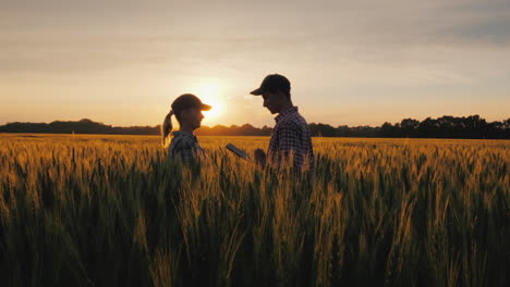 Two-Farmers-A-Man-And-A-Woman-Are-Looking-Forward-To-The-Sunset-Over-A-Field-Of-Wheat-Teamwork-In-Ag