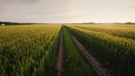 Epic-Landscape-With-A-Road-In-The-Middle-Of-Wheat-Fields-Steadicam-Pov-Video
