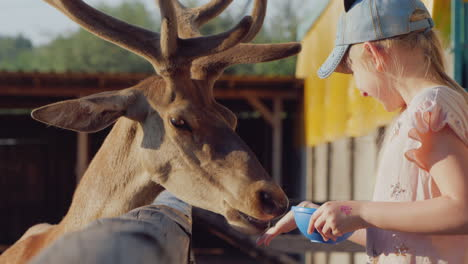A-Funny-Deer-Looks-Out-From-The-Gap-Of-The-Fence-The-Sun-A-Child-Feeds-A-Cute-Deer-Near-The-Fence