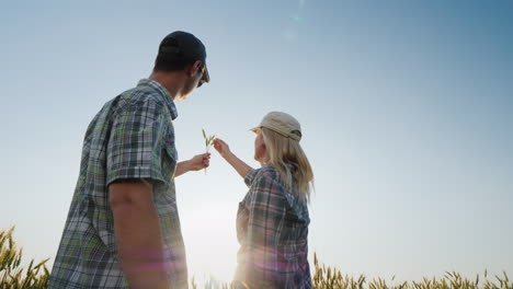 Two-Young-Farmers-A-Man-And-A-Woman-Are-Looking-At-A-Spikelet-Of-Wheat-In-The-Sun-Working-Together-O