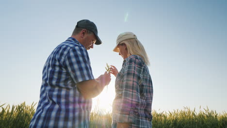 Two-Farmers-Are-Studying-Wheat-Ears-On-The-Field