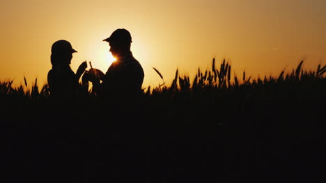 Silhouettes-Of-Two-Farmers-In-A-Wheat-Field-Looking-At-Ears-Of-Corn