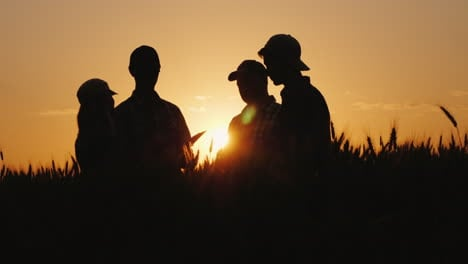 Silhouettes-Of-A-Group-Of-Farmers-Arguing-In-A-Wheat-Field-At-Sunset-A-Team-Of-Farmers