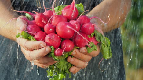 Fresh-Radish-In-The-Hands-Of-A-Farmer-Under-The-Jets-Of-Water-Pure-Organic-Product-Concept
