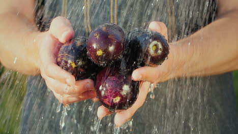 Farmer-s-Hands-Hold-Ripe-Eggplant-Under-Running-Water