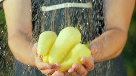 A-Farmer-Holds-Hands-With-Sweet-Pepper-Under-Running-Water-Pure-Organic-Products-Concept