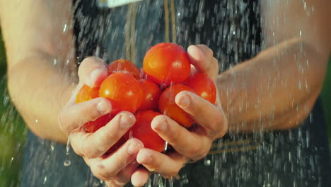 Man-s-Hands-Hold-A-Handful-Of-Tomatoes-Under-Running-Water-Pure-Organic-Products-Concept