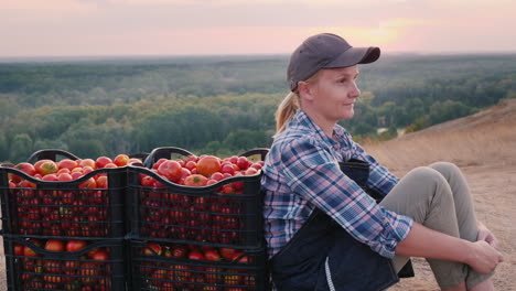 A-Young-Farmer-Sits-Near-The-Tomatoes-Collected-In-Boxes-Resting-In-A-Picturesque-Place