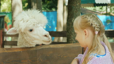 Girl-Feeds-A-Cute-Alpaca-On-A-Small-Farm
