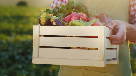 A-Worker-Holds-A-Box-Of-Vegetables-Stands-On-The-Field-Where-They-Were-Recently-Collected-Fresh-Vege