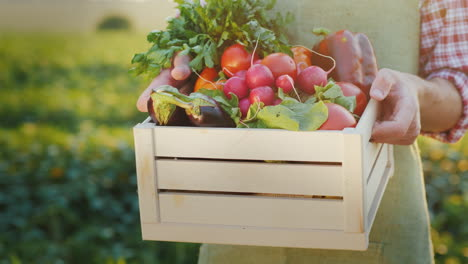 The-Farmer-Is-Holding-A-Wooden-Box-With-Fresh-Vegetables-Organic-Agriculture-Concept-Close-Up-4k-Vid
