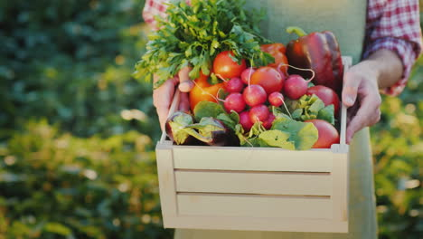 The-Farmer-Is-Holding-A-Wooden-Box-With-Fresh-Vegetables-Organic-Agriculture-Concept