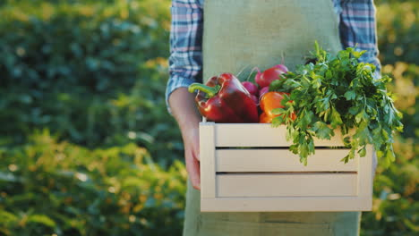A-Farmer-Holds-A-Box-Of-Juicy-Fresh-Vegetables-From-His-Field