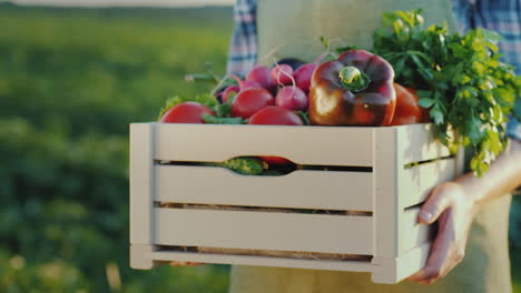 Female-Hands-Hold-A-Box-With-Fresh-Vegetables-And-Herbs-Organic-Farm-Products